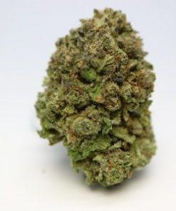 purple skunk strain