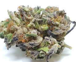 purple urkle weed strain